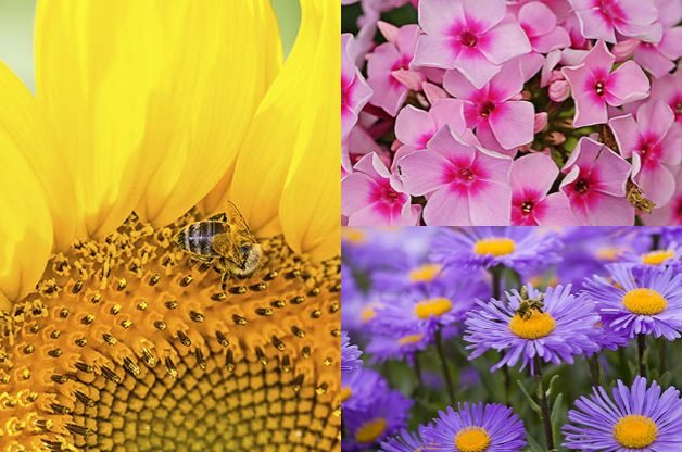 10 Plants For Bees and Other Pollinators | Gardening | Birds & Blooms Magazine