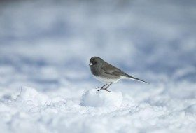 How to Help Bird Species During Extremely Cold Weather