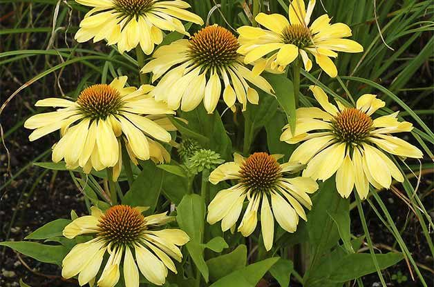 Top 10 Miniature Plants for Small Space Gardening | Birds & Blooms Magazine