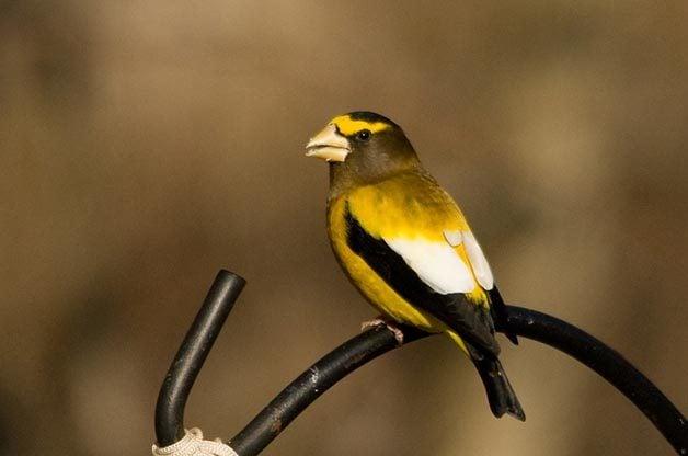 Birding Hotspots for Incredible Winter Birds