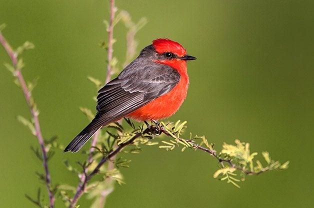 Coast to Coast Birding Hot Spots by Season   Birding   Birds & Blooms Magazine