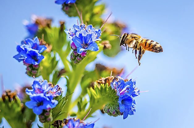 8 Ways You Can Help Save the Bees | Birds & Blooms Magazine