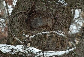 Who Could be Nesting During the Winter Months?