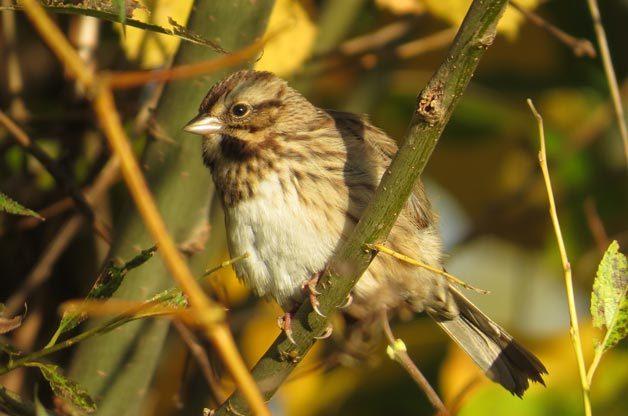 Love is in the Air: Bird Courtship Rituals   Birds & Blooms Magazine