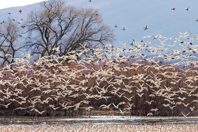 Klamath Basin National Wildlife, winter birding hotspots
