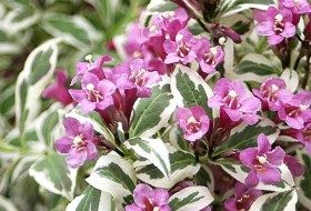 Top 10 Miniature Plants for Small Space Gardening