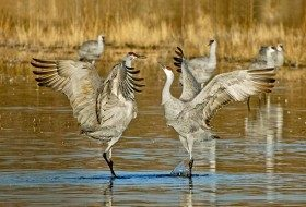 Love is in the Air: Bird Courtship Rituals