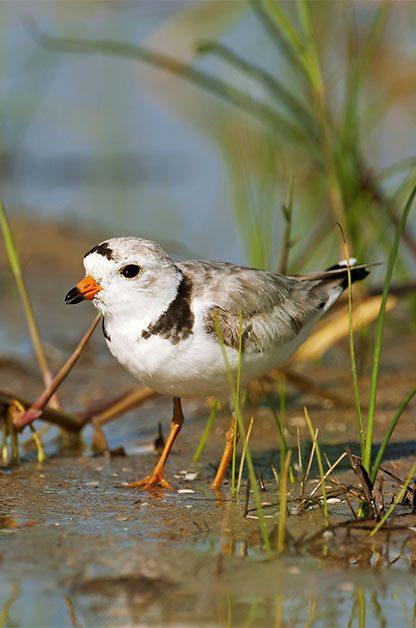 Coast to Coast Birding Hot Spots by Season | Birding | Birds & Blooms Magazine