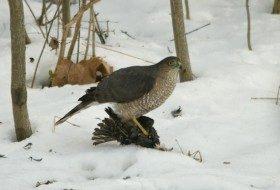 Bird Feeding Basics: Avoiding Starlings