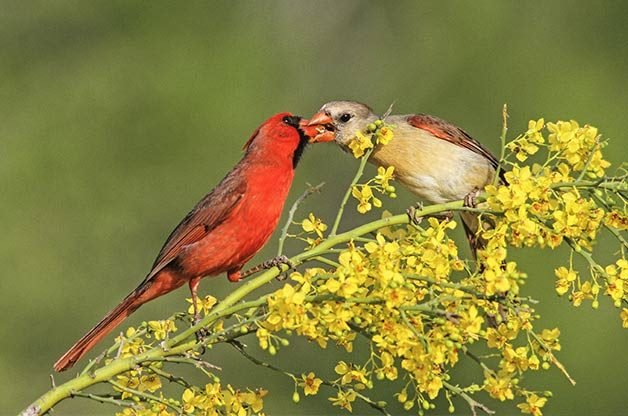Love is in the Air: Bird Courtship Rituals | Birds & Blooms Magazine
