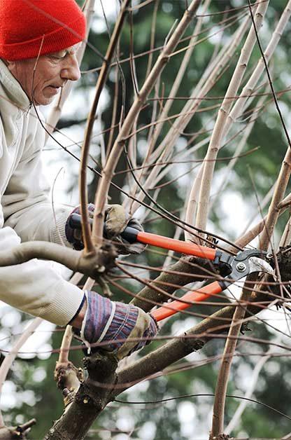 Garden pruning tips