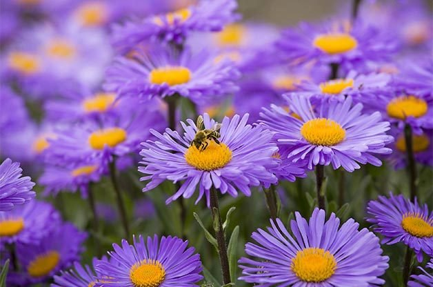 10 plants for bees and other pollinators gardening birds blooms magazine - Flowers to plant in the fall ...