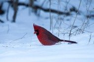 Participate in the 2016 Great Backyard Bird Count