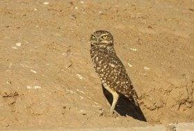 Birding Hotspots: Salton Sea, California
