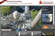 Cornell Lab of Ornithology Bird Cams Owls