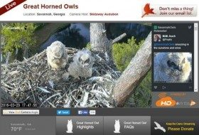 Cornell Lab of Ornithology Bird Cams Q&A