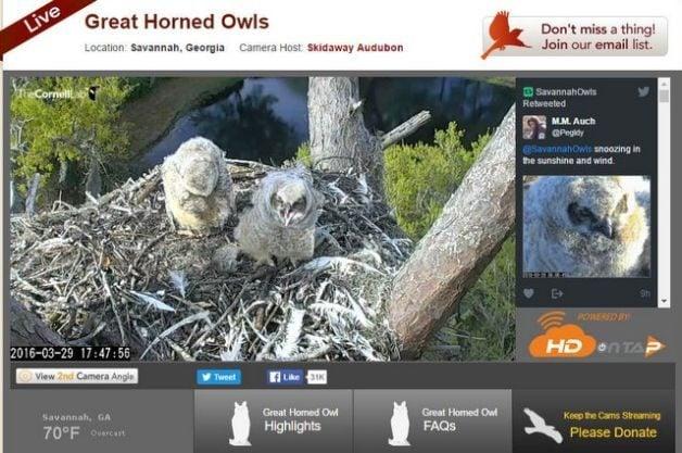 Cornell Lab of Ornithology Bird Cams Q&A   Bird Photography
