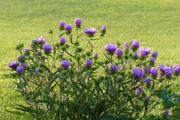 Photography Tips Magic Hour Aster