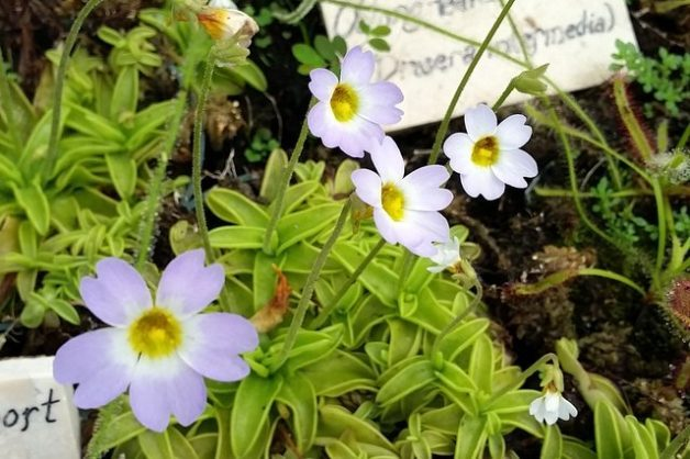 Andys northern Ontario wildflower site  plants in a