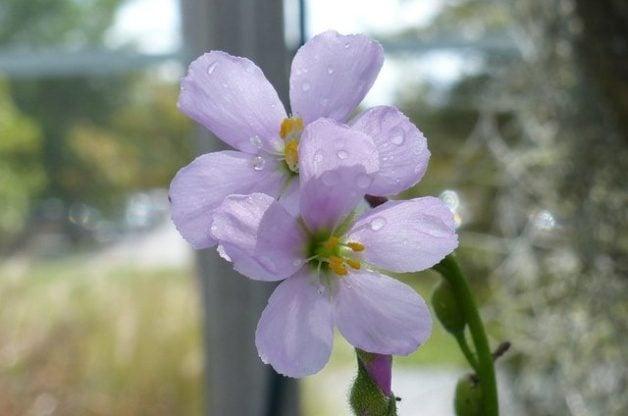 Spring Flowers Carnivorous Plants Bog
