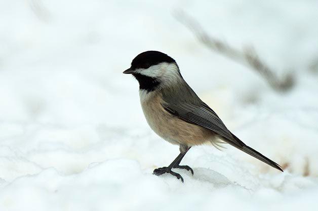 Bird Photography Tip: Practice in Your Backyard