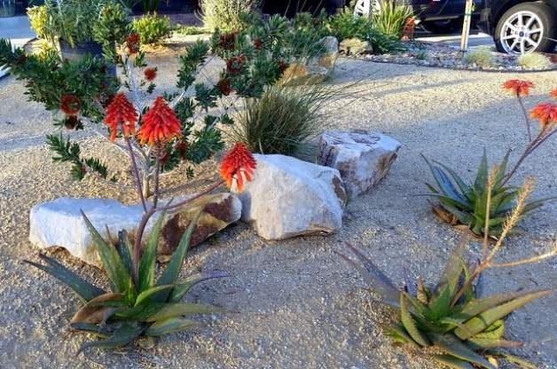 Drought Tolerant Landscaping Tips Xeriscaping Tips