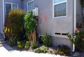 Drought-Tolerant Landscaping Tips