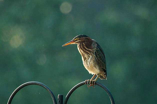 Bird Photography Tip: Practice in Your Backyard