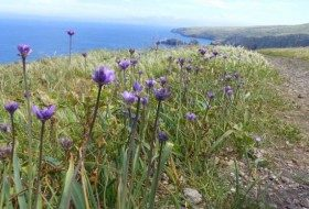 Flowers, Birds, and Other Wildlife of Santa Cruz Island
