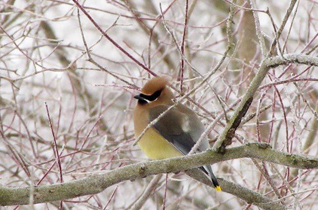 5 Ways to Help Bird Species in Your Backyard