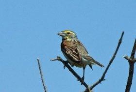 When Exactly Do Birds Migrate?