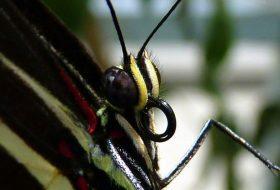 How Do Butterflies Eat? (Video)