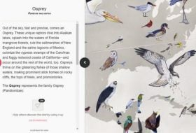 Experience the Interactive Wall of Birds Mural