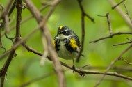 Top 5 Eastern Warblers to See This Spring