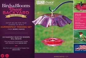 Win a New Hummingbird Feeder
