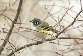 What to Look for When Identifying a Bird