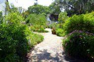 Leu Gardens Butterfly Garden