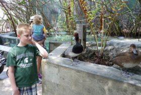 Water Bird Watching at the Florida Aquarium