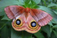 Attracting Moths Moth Night