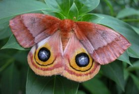 Attracting Moths and National Moth Week 2016