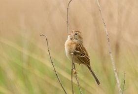 5 Tips for Learning Bird Songs