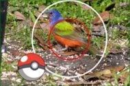 Pokemon Go Try Birding