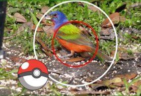 Love Pokemon Go? Try Birding!