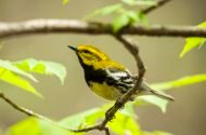 Spring is a Great Time to Join a Local Bird Hike