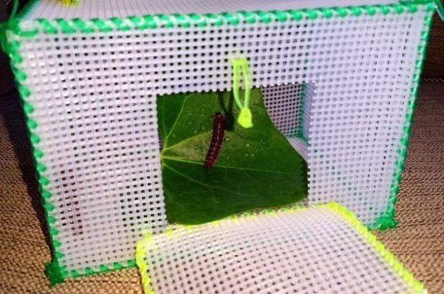 Diy bug box plastic canvas craft nature for kids for Plastic canvas crafts for kids