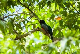 Top 5 Birding Hotspots in Southeast Arizona