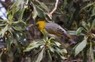 Conservation Highlight: Palila Discovery Trail