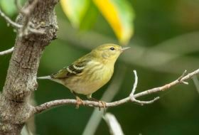What Causes Birds to Start to Migrate