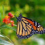 5 Essential Fall Butterfly Garden Tips