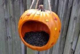Easy DIY Pumpkin Bird Feeder
